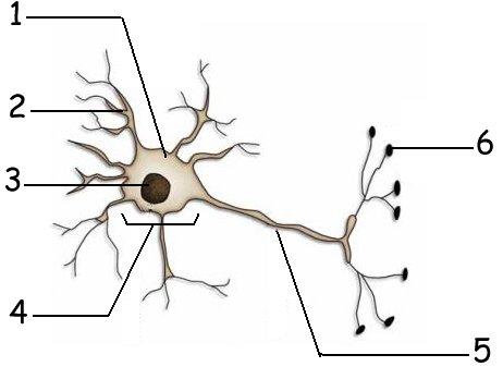 Slide16 also Namib Naukluft 2 also Legende Neurone 6 besides Slide15 moreover 548102217119771229. on ac system